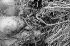 Root Entanglement