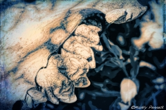Beauty in Death - Buffalo's upper jaw abstract