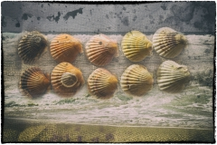 The Story of Shells