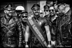 Gay Pride 50