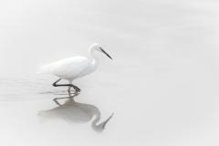 Egret & Reflection