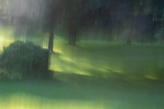 Impressions of Dappled Light