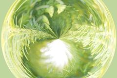 Foliage Globe