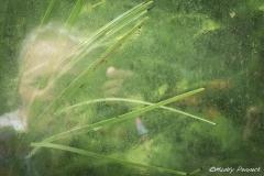Self Portait in a Greenhouse