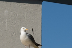 Gull Abstract
