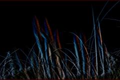 Midnight Grasses