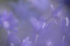 Essence of purple