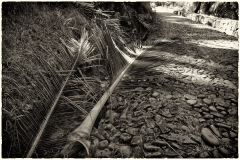 Fallen Palm Leaf