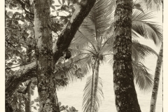 Textural Palms