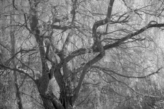 Gnarled Trees