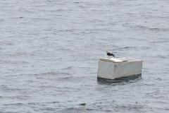 Osprey on a discarded Fridge