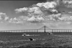 Reo Negro Bridge