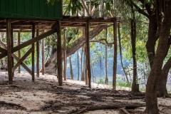 Rain Forest Dwelling