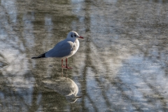 On a Frozen Lake 2