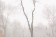 November Mist, Tiddersley Wood
