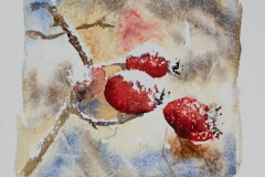 Winter Rosehips 2