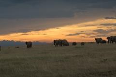 Elephant Herd at Sunset