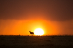 Perfect Sundown, Kenya