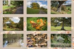 Aututmn Walk in Eastnor Park