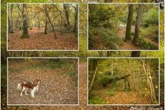 Walk in Nunnery Woods
