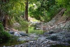 Rain Forest, Tabago